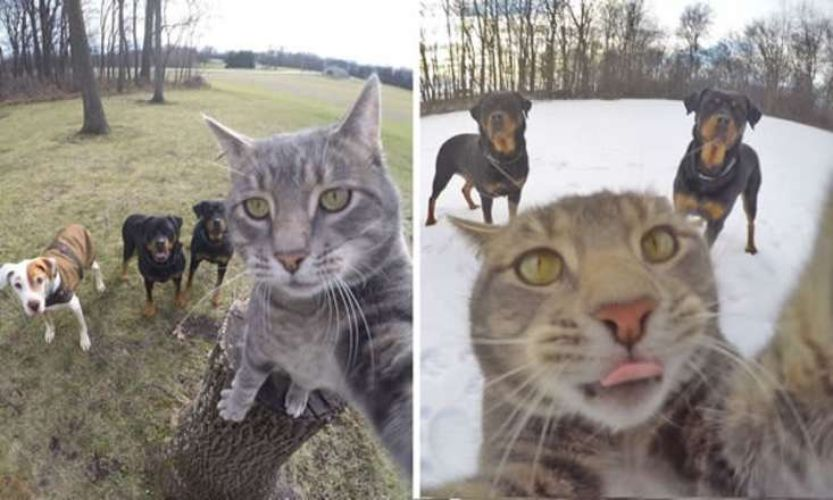 cat-pets-dogs-funny